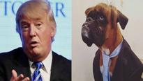 Dog with striking resemblance to Donald Trump wins best dressed competition