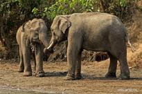 In pics: Pho Kyar Elephant Camp in Myanmar