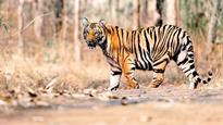 Forest department to monitor social media in order to protect tigers