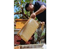 Taiwan beekeepers buzz in on pure honey venture