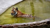 Delhi zoo is rooting for animal diplomacy to strengthen foreign relations