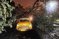 Uprooted: trees and traffic
