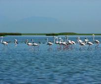 Odisha's Chilika lake turned out to be Gurukul for 26 Ramsar sites mangers from across India