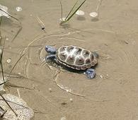 Terrapin teaches fifth-graders about life cycle in Chesapeake Bay