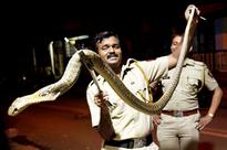 Spotted at Bandra! Senior citizen takes a 'walk' with deadly 5-ft cobra
