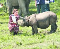 Assam efforts draw both praise & panic