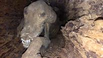 Strange Phenomenon Preserves Dog Stuck Inside Tree for Nearly 60 Years