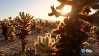 Joshua Tree National Park is a desert oasis
