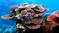 Recovery of reef is possible