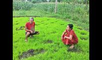 A jumbo conflict on India-Nepal border