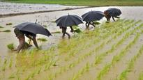 Good rains to damp agflation, support Aug 9 RBI rate cut: BofA