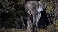 Wildlife photographer captures incredible images of African animals using camera traps