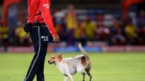 Watch: Who let the dog out? Canine runs amock during Delhi Daredevils, Pune Supergiants' match