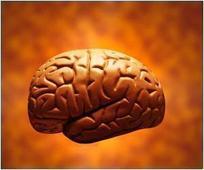 3-D Imaging Technique Maps Serotonin Activity in Living Brains