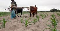 Zimbabwe calls for $1.6 billion in aid to pay for food