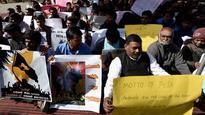 Animal rights activist face wrath of pro-Jallikattu protesters
