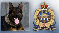 'He won't miss any time from work': EPS on police dog injured apprehending suspect