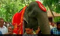 Animal Rights Body Criticise Elephant's Guinness Book Entry