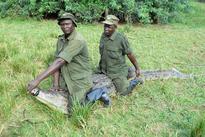 Residents accuse UWA as crocodiles wreak havoc