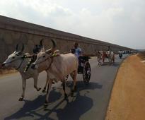 Violating SC ban, farmers conduct Rekla race in Coimbatore, Jallikattu near Nagapattinam
