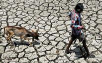 723 Killed In Heatwave In Andhra Pradesh This Year: Deputy Chief Minister