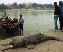 National waterways project threatens Gangetic dolphins: Conservationists
