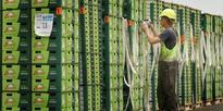 Bumper crop raises Zespri's full-year profits