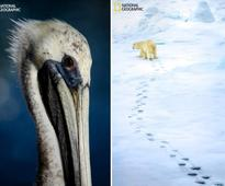 2016 National Geographic Nature Photographer of the Year: Animal entries