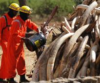 Chinese national arrested with Sh60,000 ivory at JKIA