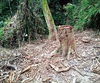 NGO glare on timber mafia