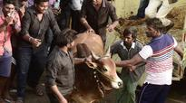 Will bring ordinance on Jallikattu, draft ready; Centre is coordinating: TN CM