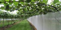Bay's kiwifruit orchard sale a record