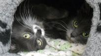 Pets Corner: Can you give Tiggy and Ruby a new home?