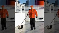 An insider's look at a cruise ship kennel (yes they exist)