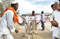 Cattle crisis after beef ban