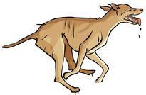 Govt should provide compensation to dog bite victims: SHRC