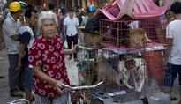 Matt Damon & Other Hollywood Celebrities Speak Out Against The Yulin Dog Meat Festival