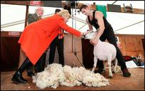 Meet our globe-trotting champion sheep shearer