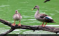 Over 40 Avian Deaths In Delhi, Government Forms Panel To Keep Vigil