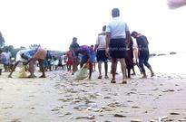Thousands of fish washed ashore after sea recedes at Kappad in Kozhikode