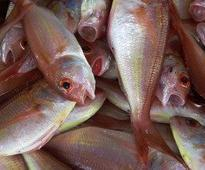 FAO to launch aquaculture project in Liberia