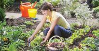 Self-sustenance with kitchen gardens