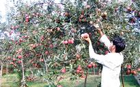 Kashmir fruit growers demand cold stores in mandis