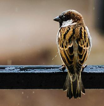 Sparrow Day: Stunning images from readers