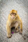 Monkey species in the CITES spotlight