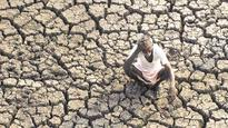 Drought triggers distress sale of cattle in Andhra Pradesh, herders turn...