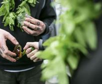 White House may boost recreational marijuana enforcement: spokesman