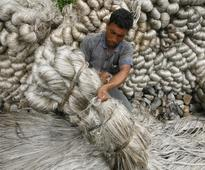 Downtrend in raw jute output takes sheen off MSP hike