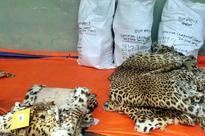 Chitwan National Park destroying stored wildlife body parts