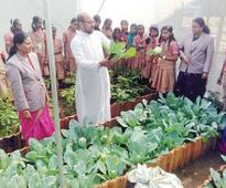 Rain shelter vegetable cultivation is not a herculean task, proves students